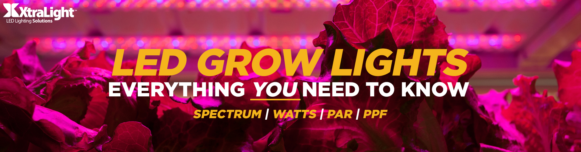 LED Grow Light BLOG