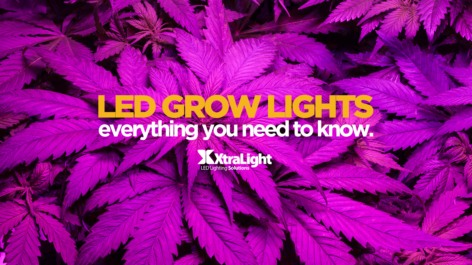 How To Pick The Right LED Grow Light: